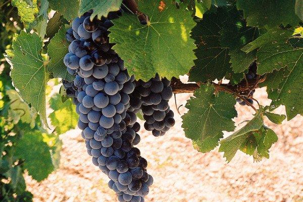 Les vins de St Tropez