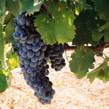 St Tropez Wines to Look Out for