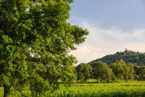 Minuty- Vineyards South of France