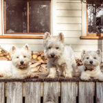 Pet-friendly rentals in Saint-Tropez