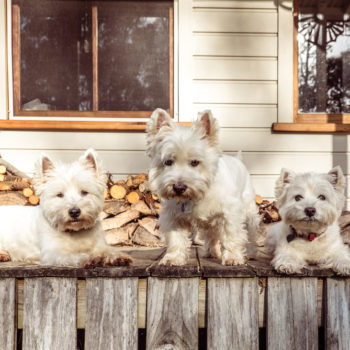 Pet-Friendly Rentals in St. Tropez – Three Villas Purrfect For Families With Pets