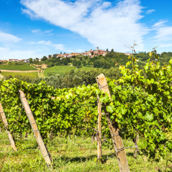Introducing 5 of the Best Vineyards Near St Tropez