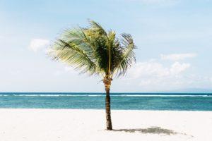 The very best St Tropez beach clubs - palm tree